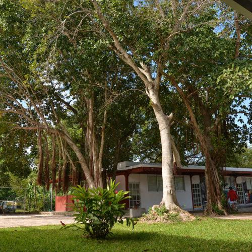 Patio Trasero Colegio Lowry School Cancún
